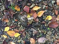 クワガタ樹液採集 2017年 8日目  10月下旬にクワガタは?… part2 - Kuwashinブログ