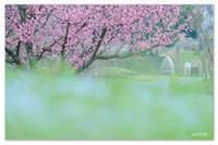 公園のふわふわ。 - Yuruyuru Photograph