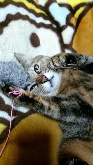 まひるちゃんトライアル3日目 3/19 - 猫びいき
