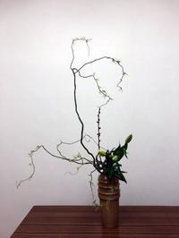 雲竜柳の瓶花 - リリ子の一坪ガーデン