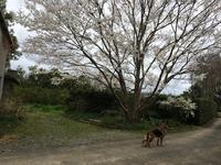 春のささやき - みかん山から(アイワ研究会)