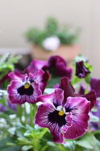 春のベランダ - クラシノカタチ