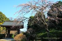 鎌倉散歩海蔵寺 - 暮らしを紡ぐ