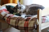 うちの猫 - ぎんネコ☆はうす