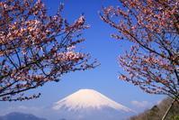 30年3月の富士(12)大井町の富士 - 富士への散歩道 ~撮影記~
