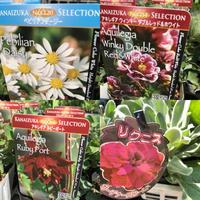 新入荷の苗たちです。 - 花の庭づくり庭ぐらしガーデニングキララ