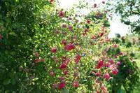 おフランスな写真を載せて逃避中 - 一会 ウエディングの花