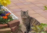 そろそろ猫の恋の季節が始まります・・・!(^^)! - 自然のキャンバス