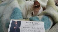 松山千春 - ジャックラッセルテリアJillの日常・かーさんの非日常