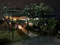 Thailand #3 - Bucerium