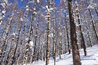 雪の面白山-11 - 自然と仲良くなれたらいいな2