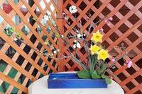 ハナモモ開花状況 - 手柄山温室植物園ブログ 『山の上から花だより』
