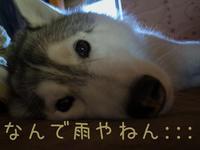 それっ! 今だ!  (^o^) - 犬連れへんろ*二人と一匹のはなし*