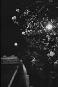 Blooming in the mid night - Mon's cafe
