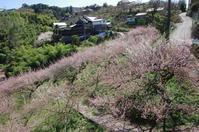 西吉野 フルーツロード - ぶらり記録(写真) 奈良・大阪・・・