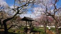 茨城へ弘道館の梅@茨城県 - 963-7837