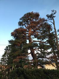 お別れ - 三楽 sanraku 造園設計・施工・管理 樹木樹勢診断・治療