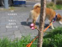 休日散歩~12km編~ - yamatoのひとりごと