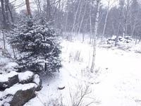 雪が降っています - 浅間高原・北軽井沢 ペンション・ローエングリンの高原日記