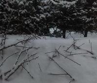 雪解け早い - 北緯44度の雑記帳