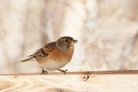 餌台にやって来る鳥たち♪ - happy-cafe*vol.2