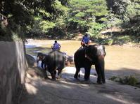 象-King's Cup Elephant Polo- - 「まもあんのタイニュース」 まもあん本舗Blog