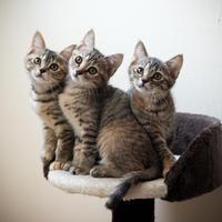 久しぶりに使われているタワー - 猫と夕焼け