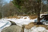 どんどん融ける土手の雪 - 照片画廊