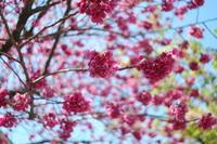 春色♡大人の女子旅 ~東京散歩・目白2~ - aya's photo
