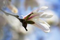 """花の写真は難しいちょっとした""""コツ""""について書いてみた - 一人の読者との対話"""