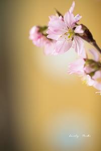 春を呼ぶ♪ - Lovely Poodle