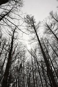王子様は森の中…かも~ - ちわりくんのありふれた毎日II