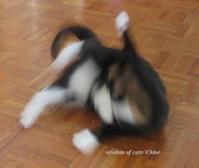 春遠し - Wisdom of Cats