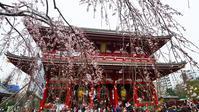 浅草寺で初桜♪ - 『私のデジタル写真眼』