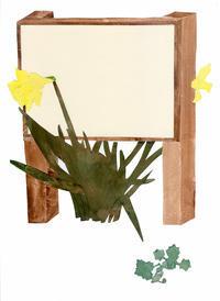 水仙narcissus - yuki kitazumi  blog