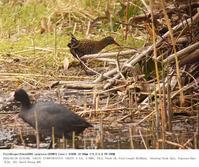 葛西臨海公園 2018.3.18(3) - 鳥撮り遊び