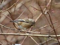 雪だ!林道だ!3月22日、久々の平日の休み。林道に行って来ました、着くなり雨で車待機、鳥もいませんでしたがCMに一人も会いませんでした。 - 鳥撮り日誌
