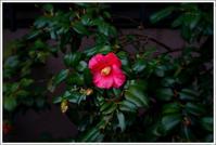 千住散歩-691 - Camellia-shige Gallery 2