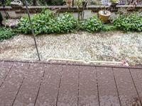 実生マンゴー栽培8ヶ月3月に積雪?! - にゃんてワンダホー!