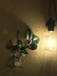 まだまだこれから「FUKUKOTOの春は花・ハナ・hana」編 - 納屋Cafe 岡山