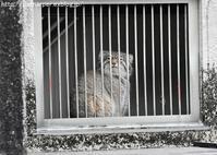 2018年2月 東山動物園 その1 ネコ科のみなさん - ハープの徒然草
