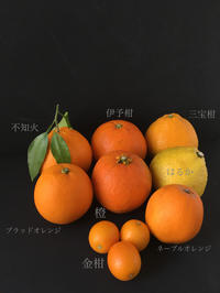 ☆ みかんみかんみかん ☆ - お菓子教室 お菓子の寺子屋のブログ