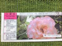 三毳山カタクリの次は「大柿花山」黄花カタクリは咲いてませんでした。通算165983番 - 設計事務所 arkilab