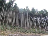 北山杉の風景 - とりさんの寡黙な日記帳