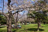 さっそく、南砂町公園で花見 - kenのデジカメライフ