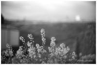 春の花 - BobのCamera