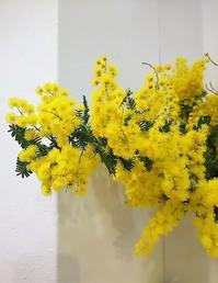 黄色い花は春の案内 - マダムサフランのおしゃべりブログ