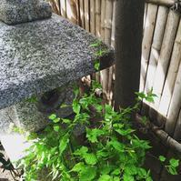 庭の花々と、週末お茶会 - ワタシ流 暮らし方   ~建築のこと日常のこと~