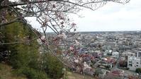 桜の花に心が弾む - 東金、折々の風景