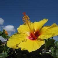 元気になるコース【OLA】オラ - aloha healing Makanoe